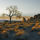 Tree at Tamarack Beach Pyramid Lake Dawn